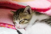 猫の慢性口内炎の治療