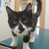 猫のフィラリア予防について